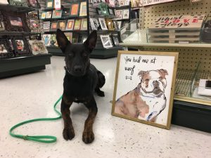 dog-friendly-shopping-places