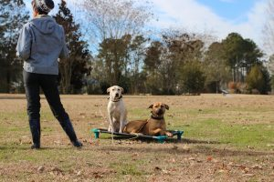 dog training all behaviors
