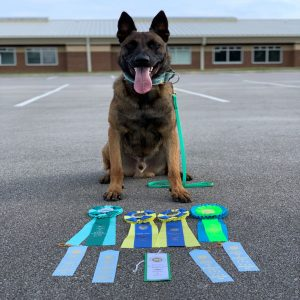 belgian malinois working dog